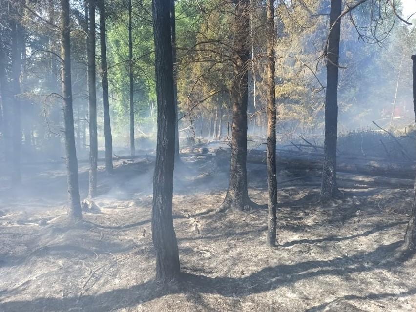 Pożary lasów regionie.