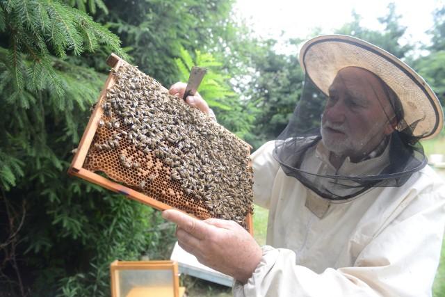 Ignacy Żegleń z Zielonej Góry Przylepu mówi, że pszczołom wyżyć coraz trudniej. Chemia, coraz mniej miododajnych upraw, zanieczyszczenie powietrza...