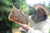 Ekolodzy i pszczelarze: To jest zamach na życie pszczół
