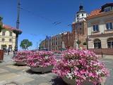 Nowe kompozycje kwiatowe ozdobią Lublin. A to ciągle nie koniec zmian na ten rok