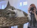 Sesja zdjęciowa ze zwierzakami. Jak je przekonać do pozowania? [wideo]