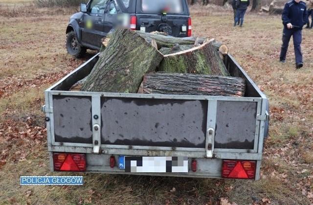 Dwaj mieszkańcy powiatu głogowskiego odpowiedzą za wycięcie drzew i kradzież drewna. O nielegalnej wycince drewna głogowska policja została poinformowana w czwartek, 30 stycznia.  Funkcjonariusze, którzy udali się na miejsce zastali dwóch mężczyzn w wieku 47 i 41 lat. Zdążyli oni załadować część drewna na przyczepkę samochodową. Mężczyźni wycięli ok. 50 metrów sześciennych drewna. Straty oszacowano na 7,5 tys. zł. Podejrzani zostali zatrzymani i usłyszeli zarzuty kradzieży. Grozi im kara do 5 lat pozbawiania wolności.Polecamy wideo: Śródziemnomorski pluskwiak dotarł do Zielonej Góry. Tysiące owadów obsiadły drzewa w centrum miasta