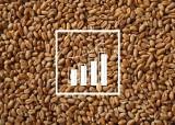 Żyto o prawie 1/3 droższe niż rok temu, pszenica też w cenie. Stawki za zboża w Polsce [maj 2021]