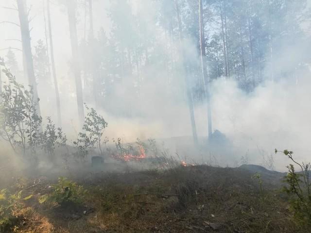 Strażacy z OSP Wasilków i OSP Jurowce w niedzielne popołudnie walczyli z pożarem lasu, do jakiego doszło w okolicach Świętej Wody na Podlasiu. Spaliło się około 600 metrów kwadratowych poszycia leśnego.