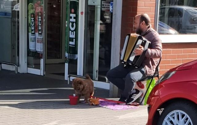 Obcokrajowcy żebrali pod marketami w Gubinie i wykorzystywali do tego psy.