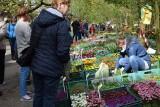 Tłumy na sypniewskich targach rolniczo-ogrodniczych. Atrakcji nie sposób zliczyć [zdjęcia]