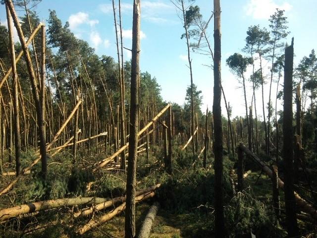 Wichura wyrządziła ogromne szkody w lasach.