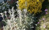 Rośliny na słoneczny skalniak. Zobacz, co posadzić, żeby wyglądał pięknie