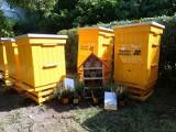 Miejskie pszczoły zamieszkały na Dębinie. Poznań dał im dom, a one poprawią klimat. Zobacz pasiekę miejską i jej nowych mieszkańców