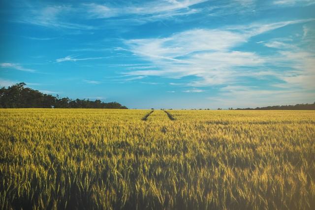 """Chcesz kupić pole w woj. lubelskim? Zobacz najlepsze oferty gruntów rolnych z olx.pl. Kliknij w przycisk """"zobacz galerię"""" i przesuwaj zdjęcia w prawo - naciśnij strzałkę lub przycisk NASTĘPNE."""