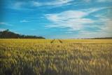 Województwo lubelskie: Grunty orne w przystępnej cenie. Chcesz kupić pole? Zobacz atrakcyjne oferty gruntów rolnych z OLX [18.04]