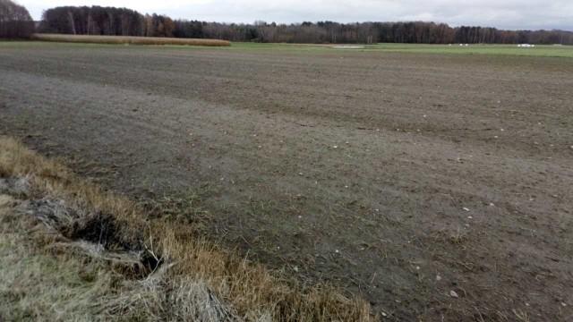 Tak wygląda pole Tadeusza Gawrysia po wysianiu zakupionych nasion pszenicy