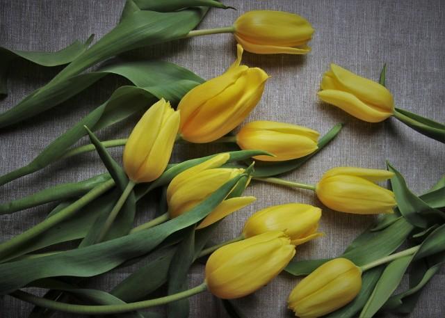 Dzień Matki już we wtorek, 26 maja. Jeśli nie możecie odwiedzić swoich mam, nie zapomnijcie do nich zadzwonić czy wysłać życzeń.