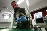 Inkubator i usg dla Ośrodka Rehabilitacji Dzikich Zwierząt w Łagiewnikach