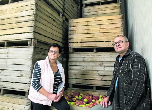 Unia płaciła za niezbieranie jabłek, a teraz ich ceny są bardzo wysokieDorota i Marek Warchołowie, sadownicy z Topolan ostatnie jabłka sprzedali 10 maja. Żałują, że nikt w Polsce nie przewidział takiej sytuacji