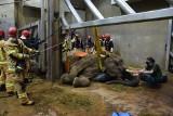 """Śmierć słonicy Lindy w poznańskim zoo: """"Najprawdopodobniej mieliśmy do czynienia z chorobą układu pokarmowego i nerek"""""""