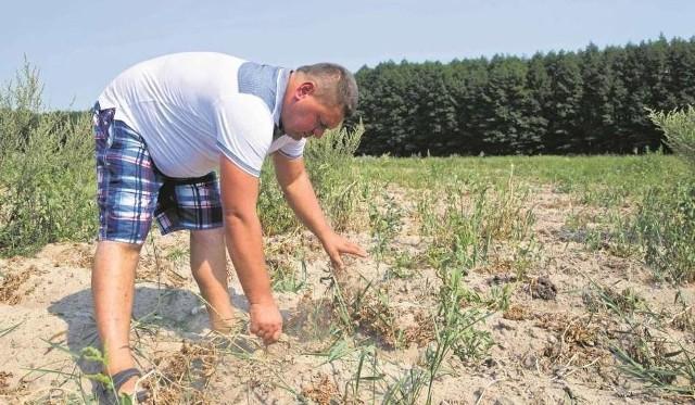 Lekko nie było - 2018 rok wyjątkowo dał się we znaki gospodarzom znad Wisły. Przypomnijmy, na co żalili się i skarżyli najczęściej.  Numerem jeden bolączek ostatnich dwunastu miesięcy była susza i - związane z nią - milionowe straty. Długo wyczekiwany deszcz, który pojawił się w lipcu, niewiele zmienił w przypadku zbóż ozimych i jarych. Kolejna kwestia, nie w każdym zakątku Polski obrodziło w wodę równomiernie - na obszarze 3-kilometrowym można było mówić o różnicy nawet kilkanastu litrów na metr kwadratowy,Fachowcy wskazywali, że podobne problemy będą się powtarzać nie tylko ze względu na zmiany klimatyczne, ale też fatalnie prowadzoną gospodarkę wodną.- Główny problem nie tkwi w skali pomocy dla rolników, ale w zabezpieczeniu się przed takimi anomaliami pogody jak w 2018 roku, które zresztą mają się nasilać - wskazał w rozmowie z Gazetą Krakowską Henryk Dankowiakowski, dyrektor Małopolskiej Izby Rolniczej. - Nie jesteśmy krajem zasobnym w wodę i nie możemy sobie pozwolić na takie jej marnowanie jak do tej pory. Jedynym wyjściem jet budowa małych zbiorników retencyjnych, zatrzymujących wodę, którą można by nawadniać pola, zamiast pozwalać jej spływać do morza.Dodajmy, że do braku opadów swoje trzy grosze dołożyły wysokie temperatury i duże nasłonecznienie, które niemal wypalały rośliny. Trudno było znaleźć w kraju gminę, w której nie odnotowano by suszy rolniczej.Przypominamy: Susza zabrało plon. Może nie starczyć na wynajęcie kombajnuRozmowa z ministrem Ardanowskim o rynku trzody chlewnej. Jaka przyszłość?