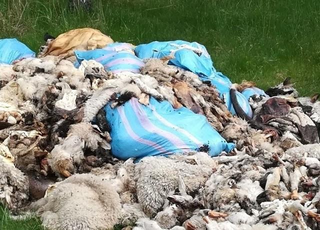 Odpady zwierzęce porzucone w lesie na terenie Mysłowic. Zobacz kolejne zdjęcia. Przesuwaj zdjęcia w prawo - naciśnij strzałkę lub przycisk NASTĘPNE