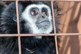 Chiny i Wietnam zakażą handlu dzikimi zwierzętami. Wszystko z powodu koronawirusa