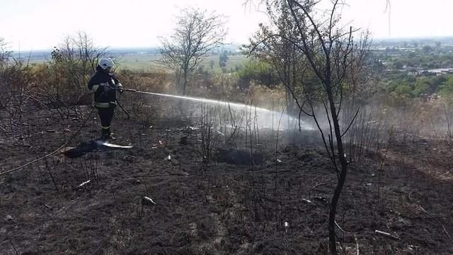 W czwartek, 15 września, w rezerwacie przyrody Gorzowskie Murawy dostrzeżono ogień. Na miejsce wysłano cztery zastępy strażaków. Zgłoszenie o pożarze strażacy odebrali po godzinie 12.00. Walka z ogniem była utrudniona, ponieważ teren, na którym położony jest rezerwat, jest mocno pagórkowaty i ciężko tu dojechać. Strażakom udało się jednak opanować sytuację i nie dopuścić do rozprzestrzenienia się płomieni. Zobacz też:  Pożar bloku w Zielonej Górze. Trzy osoby ciężko ranne. Około 100 osób ewakuowano [ZDJĘCIA]Upały i brak deszczu sprawia, że panuje susza. Szczególnie groźna jest ona w lasach, ale też na terenach trawiastych, gdzie też bardzo łatwo o zaprószenie ognia. Przypomnijmy, że poważny pożar w rejonie gorzowskiego rezerwatu miał miejsce też w maju tego roku.Zobacz też:  Wielki pożar traw i lasów w Gorzowie [WIDEO, ZDJĘCIA]