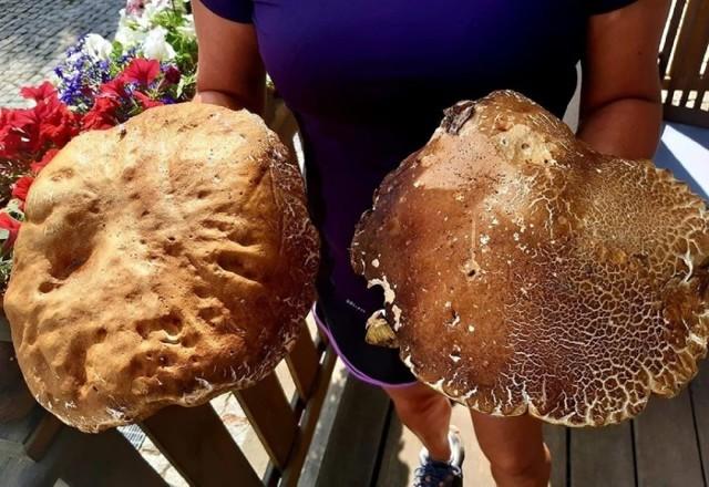 Takie grzyby rosną w lubuskich lasach. Niektóre z tych gigantów znalezionych przez naszych Czytelników ważyły kilka kilogramów! Zobaczcie galerię zdjęć. Niejednemu grzybiarzowi szczena opadnie.