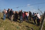 Bezpłatne warsztaty z cięcia zimowego winorośli w Lubuskim Centrum Winiarstwa w Zaborze