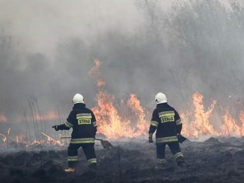 Pożar traw przy wiadukcie w Bydgoszczy