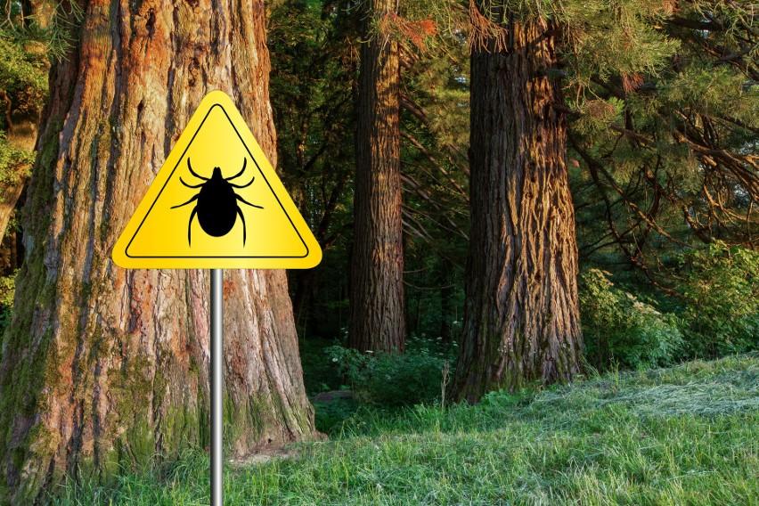 Niewidoczne pasożyty czekają na żywicieli w trawie,...