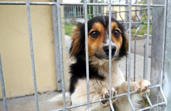 Psy w opolskim schronisku czekają na adopcję.