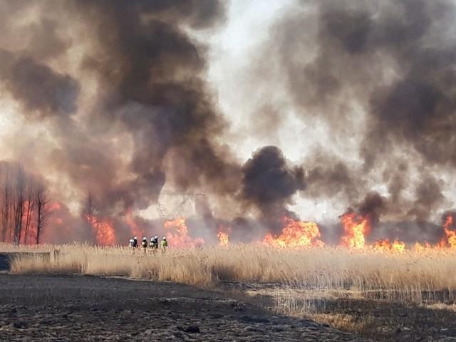 Wielki pożar traw i trzcin w gminie Mirów.