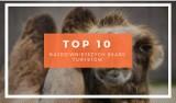 TOP 10 najdziwniejszych skarg turystów. Arabowie, wielbłądy, góry. Zobacz, co czyha na turystów za granicą.