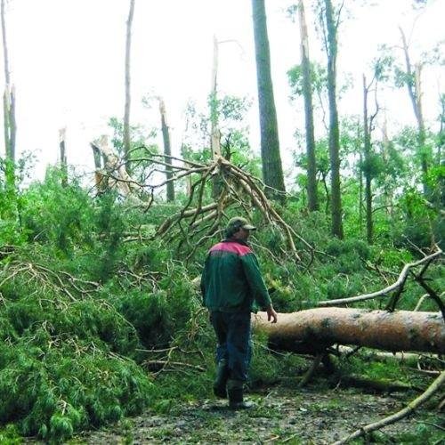 Porywisty wiatr podczas burzy, która w piątek przetoczyła się przez gminę Myszyniec, dorodne sosny łamał jak zapałki