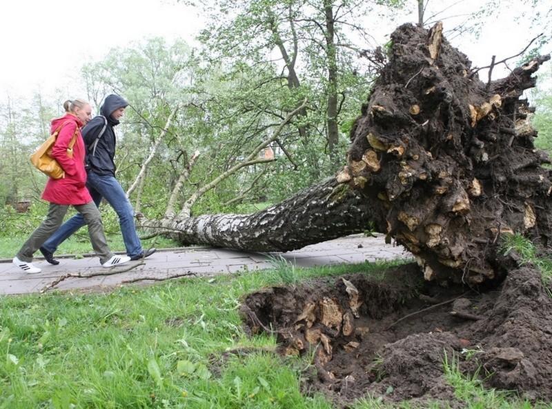 Wichura zwala drzewa i lamie galezie