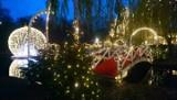 Nietypowe Boże Narodzenie. Jak torunianie spędzają święta? Nie tylko przy wigilijnym stole!
