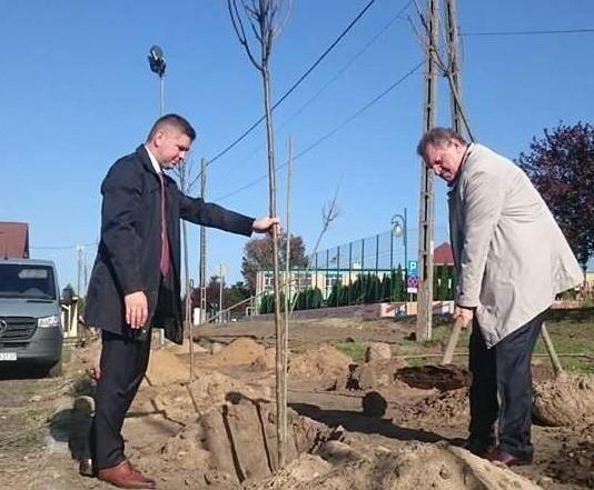 Nasadzenia drzew to pierwszy etap zagospodarowania tego miejsca.