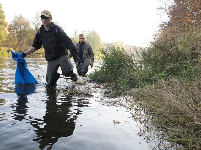 Wędkarze usunęli z Warty kilka ton śniętych ryb