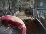 Na podwórku weterynarza z Gogolina zwierzęta zaznały piekła. Mężczyzna odpowie za znęcanie się nad zwierzętami