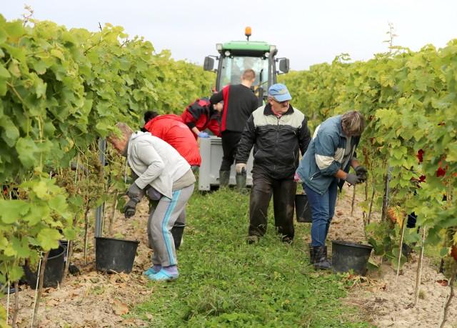Brak pracowników sezonowych z Ukrainy to duży problem dla polskich rolników.