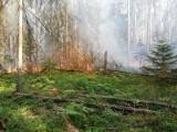 Pożar w Puszczy Białowieskiej. Wszystko wskazuje na podpalenie (zdjęcia)