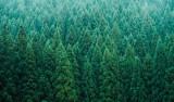 Hewlett Packard Enterprise Polska odpowiada na wyzwania klimatyczne, chce zasadzić milion drzew