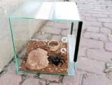 W Dąbrowie Górniczej właściciel wystawił terrarium z pająkiem ptasznikiem na śmietnik