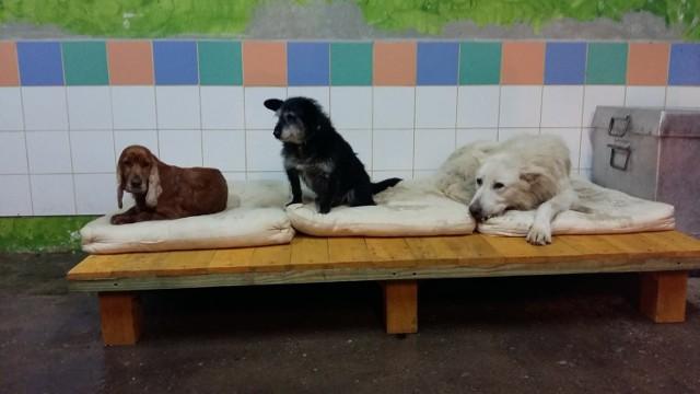 Schorowane psy, aby wrócić do zdrowia, nie mogą mieszkać w kojcach. Dlatego wolontariusze oddali im swoje biuro.