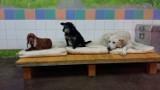 Szpitalik dla psich weteranów ma pomóc chorym czworonogom