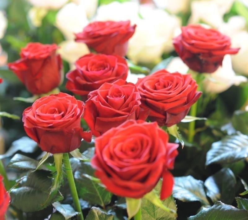 Kwiatowe Symbole Co Mówią Róża Storczyk Gerbera