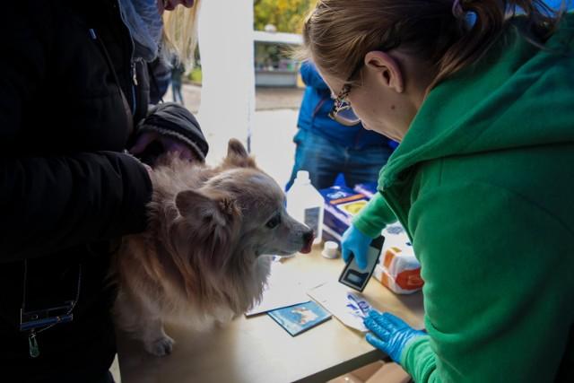 W Rzeszowie rozpocząła się akcja bezpłatnego czipowania psów.