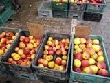 Ile kosztują owoce i warzywa na giełdzie przy Andersa w Białymstoku - ceny z 21.02.2021 roku (zdjęcia)