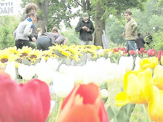 Członkowie stowarzyszenia Magazyn GS wbili w trawnik 610 kwiatów
