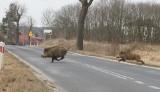 Potrąciłeś zwierzę na drodze? Uważaj, możesz dostać mandat