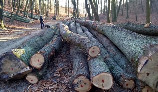 Wielka wycinka drzew w Trójmiejskim Parku Krajobrazowym. Mieszkańcy oburzeniW Trójmiejskim Parku Krajobrazowym trwa wielka wycinka drzew. Setki z nich zniknęły w ostatnim czasie z lasu wzdłuż ulicy Sopockiej