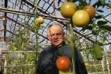 Czekoladowe i w kształcie bananów. Gdzie rosną takie pomidory?